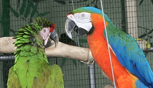 Avian Medicine at Ahwatukee Animal Care Hospital