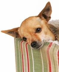 Ahwatukee Animal Care Hospital - pain medications