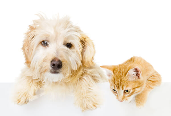 Ahwatukee Animal Care Hospital Tours