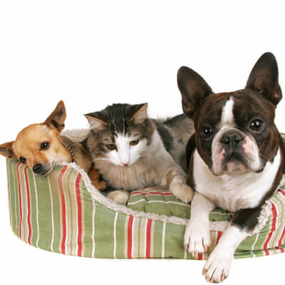 Ahwatukee Animal Care hospital pet library