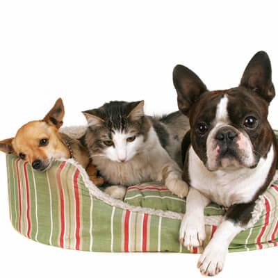Ahwatukee Animal Care hospital pet library