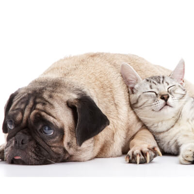Dogs and cats health issues - Ahwatukee Animal Care Hospital and Pet Resort