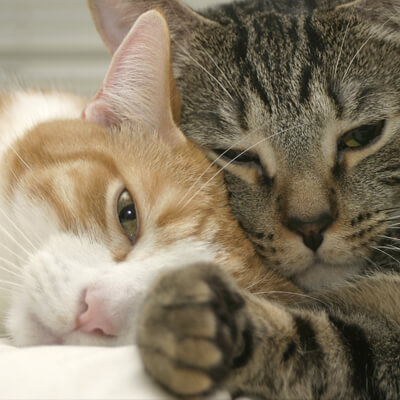 feline facts - Ahwatukee Animal Care Hospital