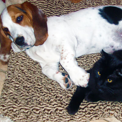 resources for pet adoption - Ahwatukee Animal Care Hospital