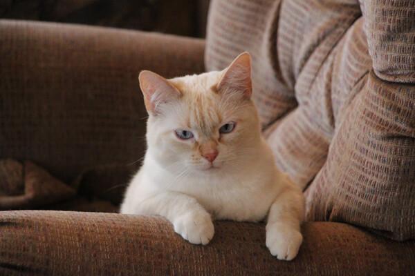 cat songs - Ahwatukee Animal Care Hospital