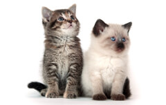 Ahwatukee Animal care Hospital offers vaccinations for your kitten.