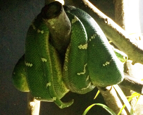Snake Care