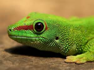 Lizards and reptiles Ahwatukee Animal Care hospital