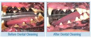 Dental cleaning Ahwatukee Animal Care Hospital