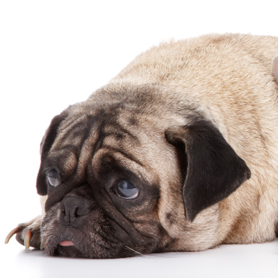 Ahwatukee Animal Care hospital - signs your pet may be in pain