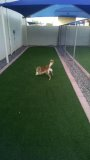 Ahwatukee Animal Care Hospital Play Yard