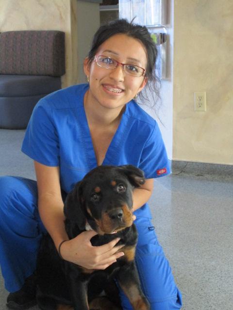 Veterinary technicians at Ahwatukee Animal Care Hospital
