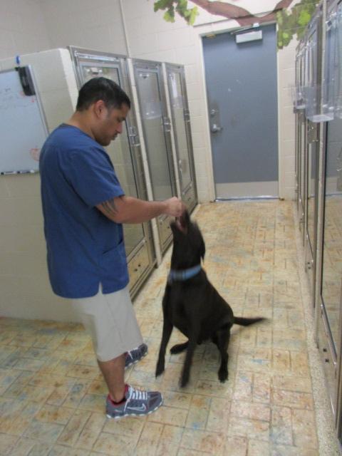 Ahwatukee Animal Care Pet Resort