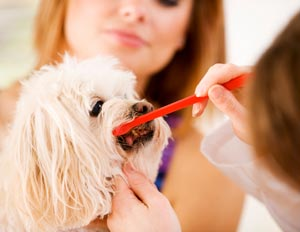 Pet dental care Ahwatukee Animal Care Hospital veterinary practice