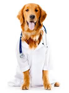 Veterinarians at Ahwatukee Animal Care Hospital in Ahwatukee