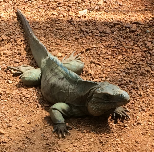 Reptile boarding and veterinary medicine at Ahwatukee Animal Care Hospital