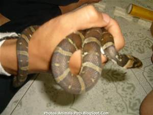 Ahwatukee Animal Care Hospital and Pet Resort provides veterinary medical care and boarding services for your snake.