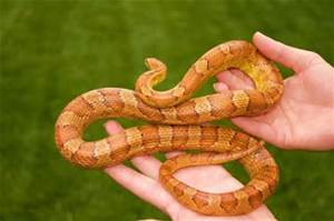 Snake Healthcare from Ahwatukee Animal Care Hospital