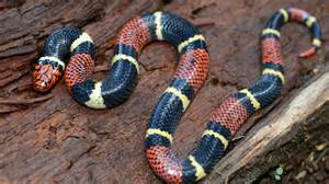 Ahwatukee Animal Care Hospital provides annual examinations and parasite control for your snake