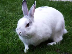 Ahwatukee Animal Care Hospital and Pet Resort Rabbit Veterinary care and boarding