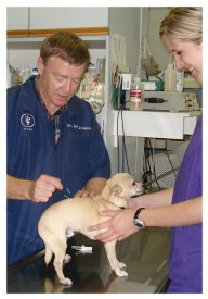Dr. Jeffrey Jenkins - veterinarian and owner of Ahwatukee Animal Care Hospital