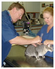 Ahwatukee Animal Care Hospital  Dr. Jeffrey Jenkins, veterinarian and owner