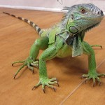Reptile Medicine and Surgery at Ahwatukee Animal Care Hospital