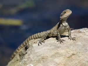 Veterinary care for reptiles at Ahwatukee Animal Care Hospital