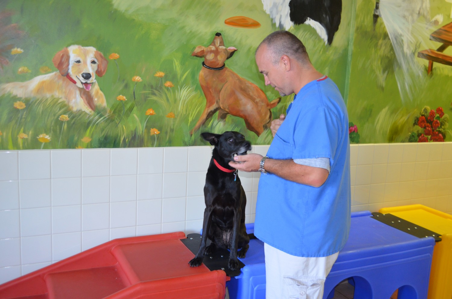 Doggie Daycare at Ahwatukee Animal Care Hospital