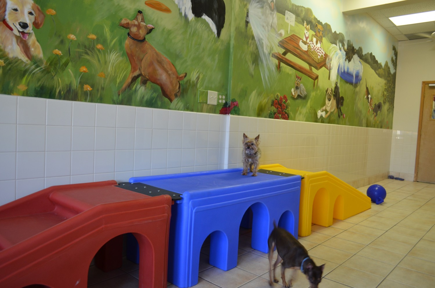Daycare at Ahwatukee Animal Care Hospital