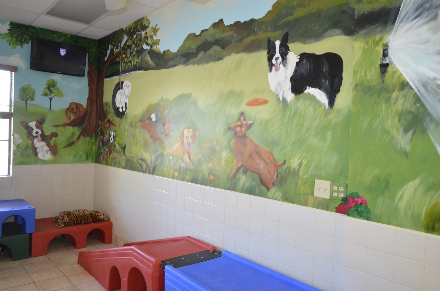Indoor play area at Ahwatukee Animal Care Hospital