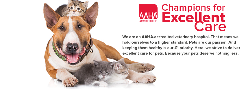 Ahwatukee Animal Care Hospital is American Animal Hospital Association accredited