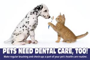 Dental Care and diets from Ahwatukee Animal Care Hospital