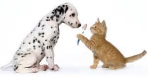 Ahwatukee Animal Care hospital and Pet Resort - dental cleanings