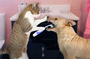 Ahwatukee Animal Care Hospital -dental cleanings