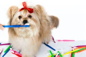 Ahwatukee Animal care hospital =dental care and health