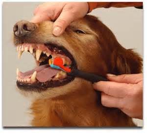 Annual dental exams and cleanings are recommended