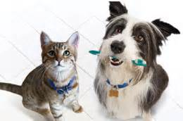 Ahwatukee Animal Care Hospital - dental care