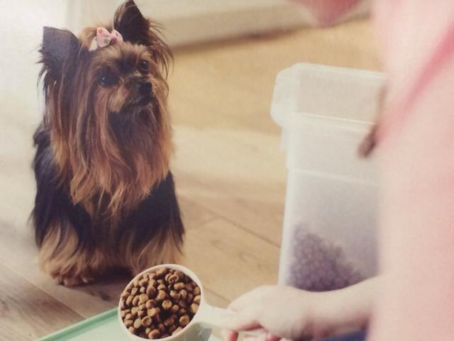 Ahwatukee Animal Care Hospital and Pet Resort Retail Area has selection of healthy pet foods