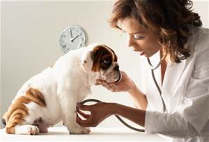 annual physical examination for your pet at Ahwatukee Animal Care Hospital