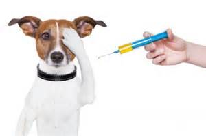 Ahwatukee Animal care Hospital offers vaccinations for your pet.