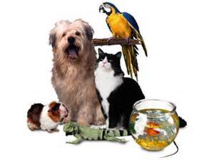 Ahwatukee Animal Care Hospital and Pet Resort lodging for dogs, cats, birds, small mammals and exotics.