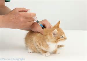 Vaccine protocols and vaccinations at Ahwatukee Animal Care Hospital