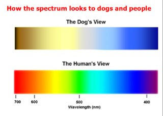 Ahwatukee Animal Care Hospital -dogs see color
