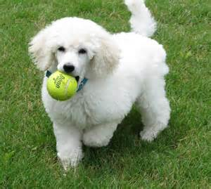 We provide play and exercise time for your pets and lots of personal attention when they board with us at Ahwatukee Animal Care Hospital and Pet Resort