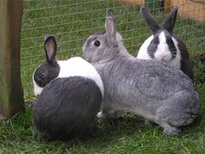 Veterinary medicine for rabbits offered at Ahwatukee Animal Care Hospital
