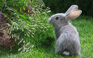 Rabbit care at Ahwatukee Animal Care Hospital and Pet Resort