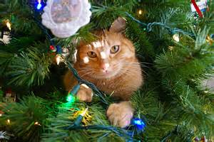 Christmas Trees and pets - Ahwatukee Animal Care Hospital