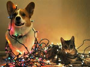 Ahwatukee Animal Care Hospital and Pet Resort - dangers of Christmas trees and lights